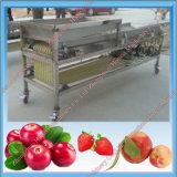 Máquina de classificação do vegetal e da fruta