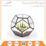 Geval van de Houder van de Cactussen van de Varen van het Mos van de Doos van Terrarium van het Glas van Clea het Succulente