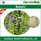 Естественная выдержка Baicalin Baical Skullcap