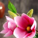 홈 결혼식 또는 정원 훈장 (SF15621)를 위한 3개의 헤드를 가진 인공적인 태산목 꽃