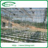 Tomato를 위한 코코야자 토탄에 있는 Hydroponic System