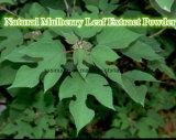 Естественный порошок выдержки листьев шелковицы/L. Morus Alba