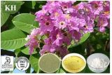 Extracto de la hoja del ácido el 1%~98% Banaba de Corosolic de la diabetes de la lucha