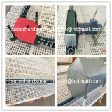 Plein Set Automatic Poultry Farming Equipment pour Breeder House