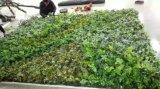 Piante di alta qualità e fiori artificiali della parete verde Gu-Wall09887986220036
