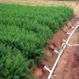 Cinta ambiental barata de la irrigación de la buena calidad para el riego de la agricultura