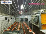Edifício de aço da construção com a instalação e equipamento para a galinha