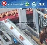 직류 전기를 통한 3 층 계란 놓는 암탉 건전지 감금소