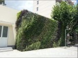 Piante di alta qualità e fiori artificiali della parete verde Gu-Wall23767848423