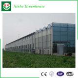 De Serre van het Glas van het Type van China Venlo voor Groente en het Groeien van Bloemen
