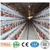 Capacidade elevada do equipamento das aves domésticas uma gaiola da exploração agrícola de galinha da bateria