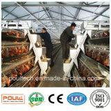 Цыплятина подает клетка батареи цыпленка курочки оборудования фермы /Poultry оборудования