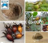 Het Gediplomeerde Natuurlijke Gingko Biloba Uittreksel van ISO