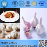 Snow White Garlics Preis mit Qualität