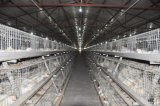 Клетка цыпленка бройлера с автоматической системой оборудования для фермы поголовья (тип)