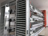 De hete Gegalvaniseerde Kooi van de Kip van de Batterij van de Apparatuur van het Gevogelte