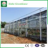 꽃을%s 유리제 빈 강화 유리 정원 녹색 집