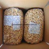 Arachides rôties Inshell à vendre la collecte neuve