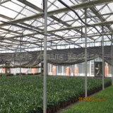 Type populaire de Venlo serre chaude de polycarbonate à vendre