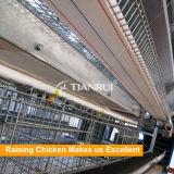 Sistema automático de la jaula del pollo de la capa de 4 gradas de la fuente de la fábrica de Tianrui
