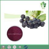 Schwarzes Chokeberry-Auszug-Antioxidanspolyphenol 10%-30%