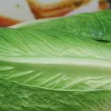 Het Groene Model van uitstekende kwaliteit van het Voedsel van Pu Kunstmatige Plantaardige