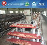 층 닭 (A3L120)를 위한 최신 직류 전기를 통한 자동적인 영농 기계
