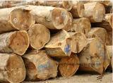 [كمرو] ([تك] [برزيلين]) خارجيّة خشب صلد [دكينغ] ألواح