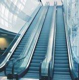Escalera móvil comercial del pasajero costada para la alameda de compras