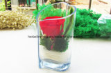 Искусствоо DIY сохранило цветок с Heart-Shaped украшением дома стеклянной бутылки коробки
