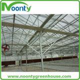 Chambre verte de feuille/plastique/en verre de polycarbonate pour des légumes/jardin