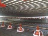 Casa modificada para requisitos particulares de las aves de corral de la estructura de acero