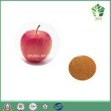 Polyphénols normaux élevés 50%, 70%, 75%, extrait de 80% Apple