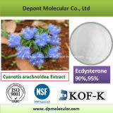 Cyanotis Arachnoidea Auszug, 20-Beta-Hydroxy-Ecdysterone, Ecdysterone 90%, 95%