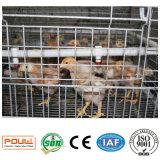 Le poulet met en cage le système du petit) poulet de poulette (