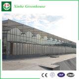 大きいマルチスパンのポリカーボネートの板ガラスの温室