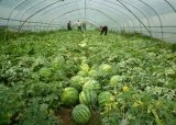 Greenhouses 그리고 양상추 부속품을%s 상업용 Hydroponic 시스템
