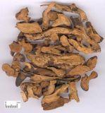Extracto del rizoma del Drynaria de alta calidad