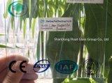 Freies Nappelite gekopiertes Glas mit Cer, ISO (3-8mm)