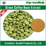 Естественная зеленая выдержка кофейного зерна с хлорогеновой кислотой