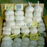 Chinesischer normaler weißer Knoblauch und reiner weißer Knoblauch