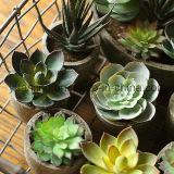 Plantas artificiales superventas de Sinocrassula Indica