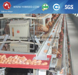 Клетки батареи машинного оборудования фермы для самое лучшее кладя курицы продавая в Алжире (A4L160)