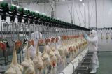 Type de contrôle automatique complet Ligne d'abattage de poulet