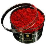 Lusso, radura romantica mentre contenitore di plastica acrilico nero di fiore della Rosa, caso di memoria della Rosa