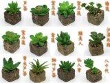 Piante e fiori artificiali di Gu-SD0099 succulente