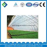 Serre van het Blad van het Polycarbonaat van de Spanwijdte van de landbouw de Multi voor het Planten
