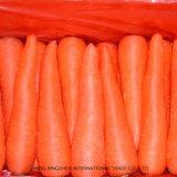 Горячее сбывание для новой свежей моркови 150g-200g 2017 от Китая