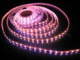 Striscia flessibile di colore dentellare impermeabile LED di 5050SMD DC12V