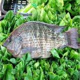 Завод Fishmeal и рыбий жир для обрабатывающих оборудований питания